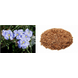 SC FLAX SEED PURE & NATURAL-EO1778-sm