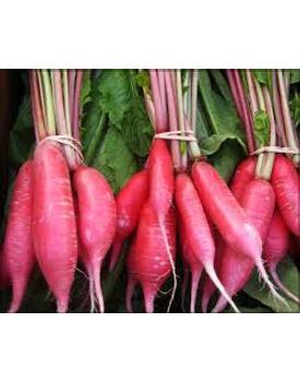 veg RADISH RED