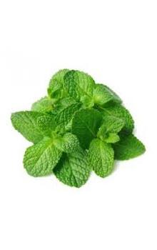 Mint Leaves, 100 g