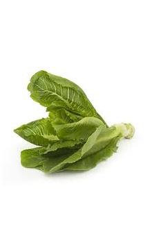 Lettuce - Romaine, 100 to 150 gm