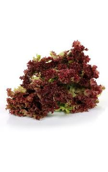 Lettuce - Red, 70 to 100 gm (Bunch)
