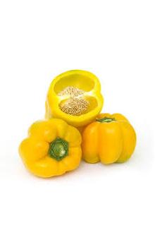 Capsicum - Yellow, 500 g