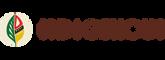 Indigenous-logo