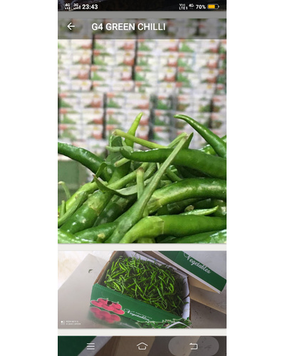 Green Chilly-2