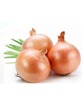 Indian  Onion Red
