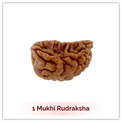 Siddh 1 (Ek) Mukhi Rudraksha-117
