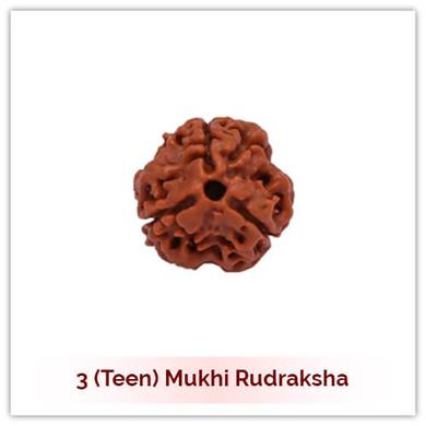 Siddh 3 (Teen) Mukhi Rudraksha-119