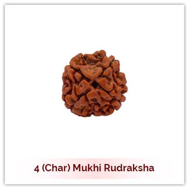 Siddh 4 (Char) Mukhi Rudraksha-120