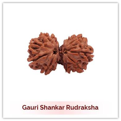 Siddh Gauri Shankar Rudraksha-132