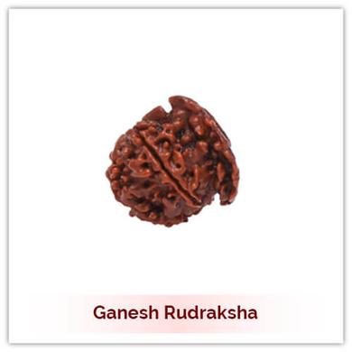 Siddh Ganesh Rudraksha-131