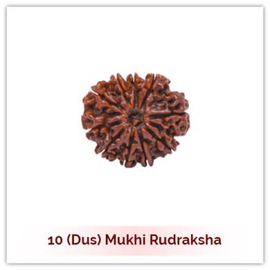 Siddh 10 (Dus) Mukhi Rudraksha-126