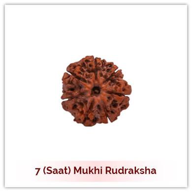 Siddh 7 (Saat) Mukhi Rudraksha-123