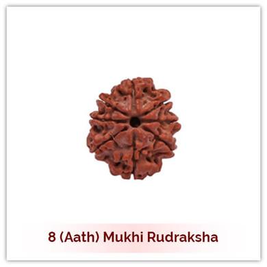 Siddh 8 (Aath) Mukhi Rudraksha-124